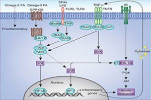 Signaling Pathways (qPCR 96 or 384 plates) compatible with all qPCR instruments.