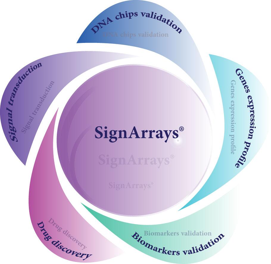 Voies de signalisation Les qPCR arrays spécifiques de voies de signalisation (SignArrays) peuvent être utilisés pour diverses applications : du profil d'expression génique à l'identification et validation de biomarqueurs.