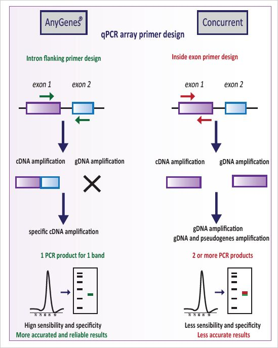 qPCR Array and PCR Array Strict intron flanking primer design to guarantee the high specificity of our qPCR primers.