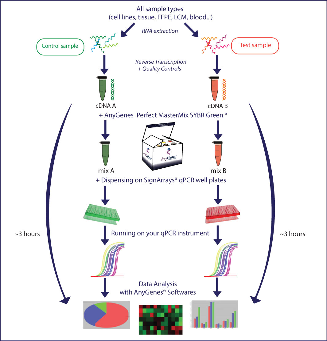 qPCR Array and PCR Array An optimised protocol to ensure you SignArrays Signaling Pathways results in less than 2 hours !