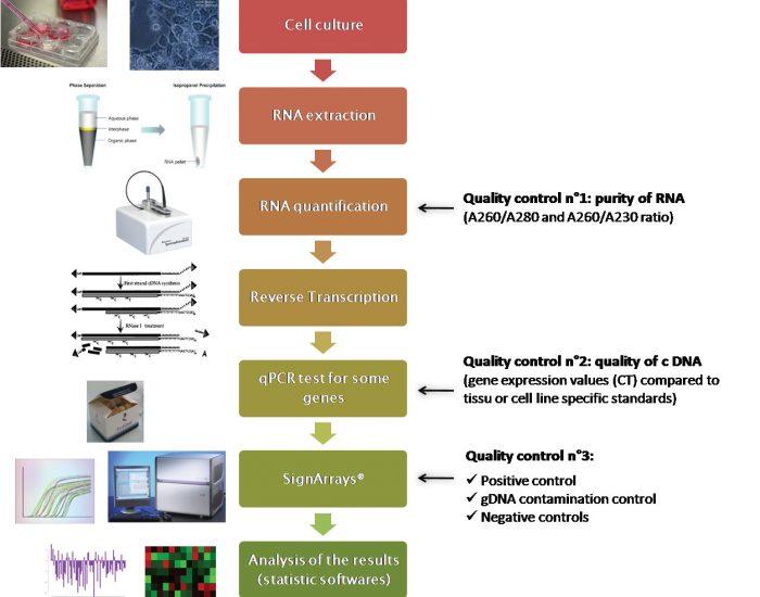 AnyGenes a développé des procédures robustes pour l'analyse de l'expression génique par qPCR arrays spécifiques de toute voie de signalisation, par le biais de notre plateforme moléculaire haut débit.