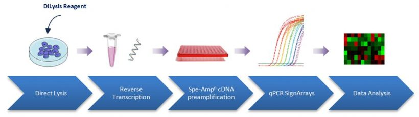 DiLysis reagents have been optimised to offer you a simple and fast procedure to directly proceed to transcriptomic analysis from few cells.