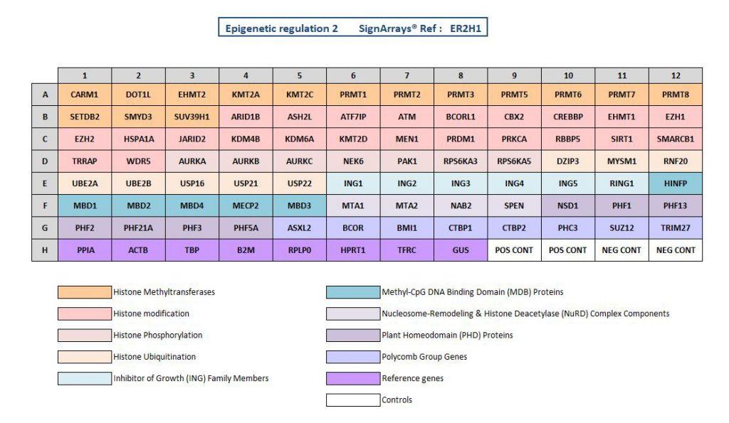 Epigenetic regulation signaling pathway ER2H1 Voie de signalisation de Régulation Epigénétique ER1H1 pour explorer les mécanismes épigénétiques impliqués via la technologie de qPCR arrays (SignArrays). to explore involved epigenetic mechanisms by qPCR arrays technology (SignArrays).