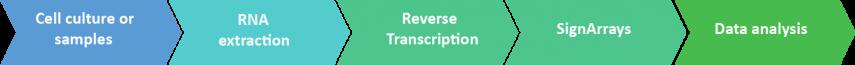 AnalysezAnalyse the epigenetic regulation signaling pathways by qPCR arrays technology (SignArrays), supported by our robust and reliable procedures. les voies de signalisation de régulation épigénétique par la technologie de qPCR arrays (SignArrays), appuyée par nos procédures hautement robustes.