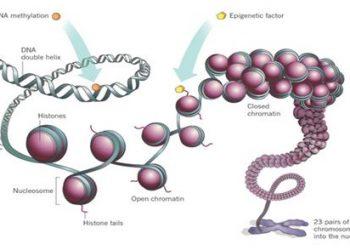 Analysez les évènements épigénétiques en étudiant l'expression génique des facteurs impliqués par qPCR arrays ou la méthylation de l'ADN par pyroséquençage avec les services AnyGenes.