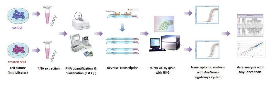 Nos services de développement de molécules in vitro sont appuyés par la technologie de qPCR arrays pour explorer les biomarqueurs et voies de signalisation impliqués.