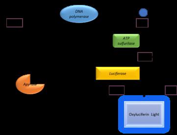 Le pyroséquençage est une technologie de choix pour l'analyse du niveau de méthylation de l'ADN sur des séquences cibles.is the technology of choice to analyse the DNA methylation level of target sequences.