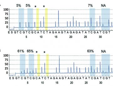 All our primers and probes are experimentally validated to give the best reliable results concerning methylation levels of each CpG islet of target sequences in pyrosequencing pyrograms.