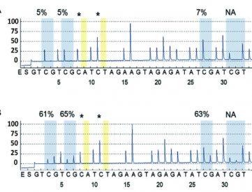 Tous nos primers et sondes sont validés expérimentalement pour vous apporter les meilleurs résultats concernant le niveau de méthylation de chaque îlot CpG de séquences cibles sur les pyrogrammes de pyroséquençage.