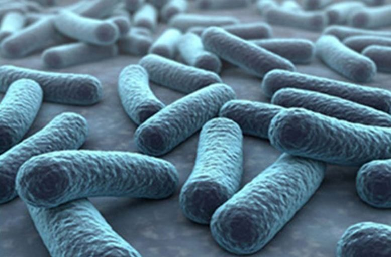 Explore the microbiota profile of your samples with our qPCR Microbiota Assays available in several formats.