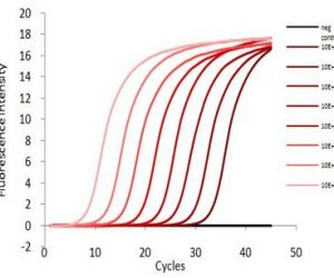 Our qPCR Perfect Master Mix PROBE reagents have been optimised to ensure high sensitivity, efficiency and reliability.